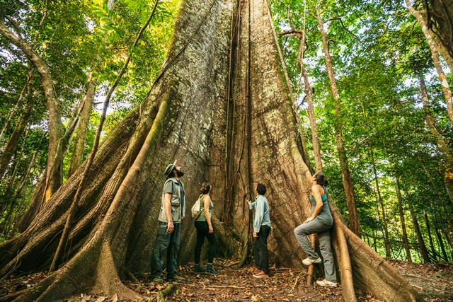 Ârvores milenares na Amazônia