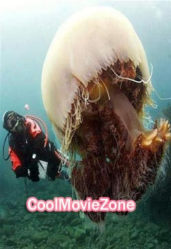 Attack Of The Giant Jellyfish (2013)