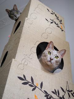 kratzb ume katzenkratzb ume kratzbaum kratzm bel oder katzenm bel. Black Bedroom Furniture Sets. Home Design Ideas