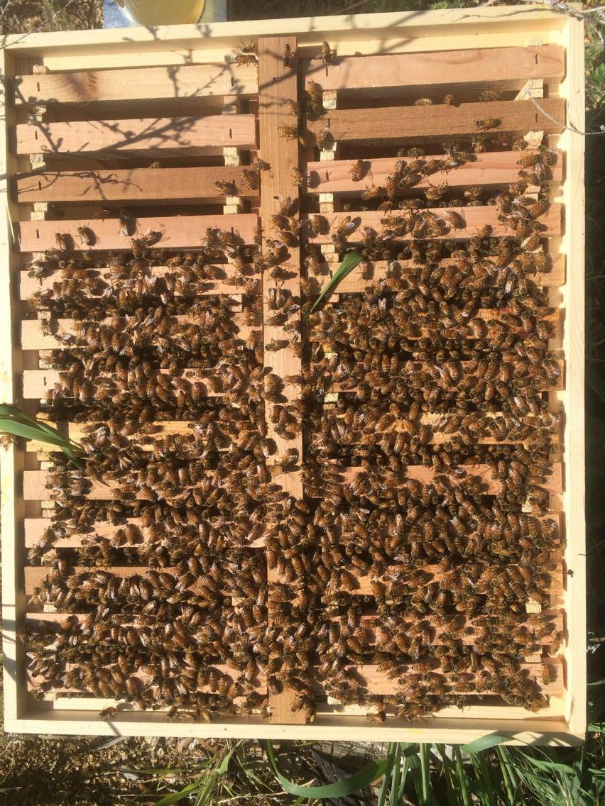 How to save a colony with an Eco Bee Box 26 Frame Comb/Brood Beehive ...