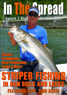 in the spread fishing stripers striped bass todd asher shad nasty