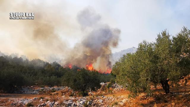 10.000 στρ. καμένης γης ο απολογισμός των πυρκαγιών σε Αργολίδα και Κορινθία