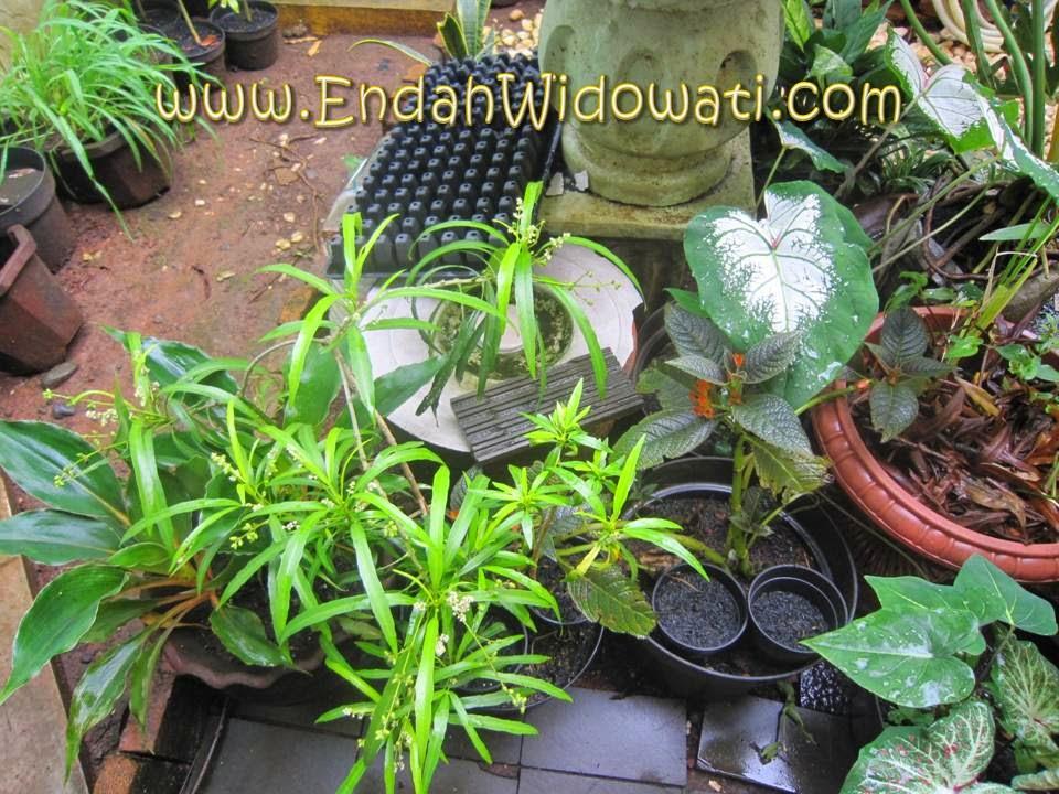 Tempat kompos disamarkan di antara tanaman