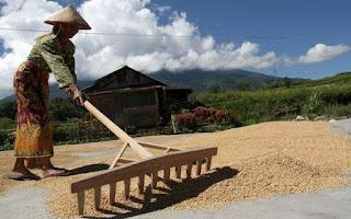 pengering padi vertikal, pengering jagung vertikal, pengering gabah vertikal,