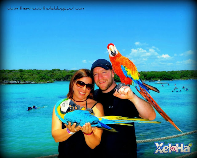 animals at Xel-Ha park, Akumal water park, things to do in Mexico