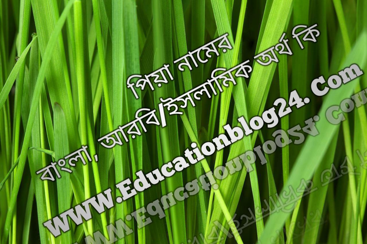 Piya name meaning in Bengali, পিয়া নামের অর্থ কি, পিয়া নামের বাংলা অর্থ কি, পিয়া নামের ইসলামিক অর্থ কি, পিয়া কি ইসলামিক /আরবি নাম