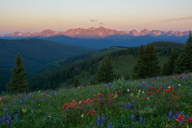 Wildflowers at Shrine Mountain with Mt. of the Holy Cross near Vail Pass, Colorado