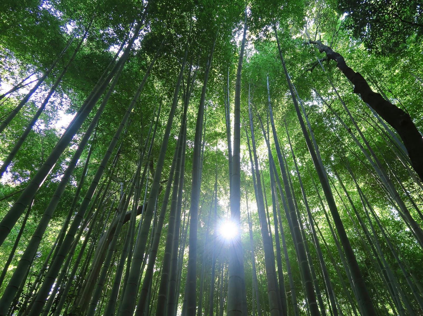Arashiyama-bamboo-grove-forest-Kyoto-Japan