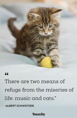 Cats Cute, Cats,