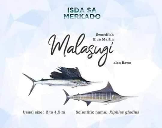 Isda Malasugi (Swordfish Sailfish / Blue Marlin) Fish