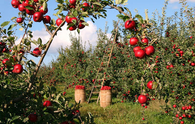 Apples  for Radient skin