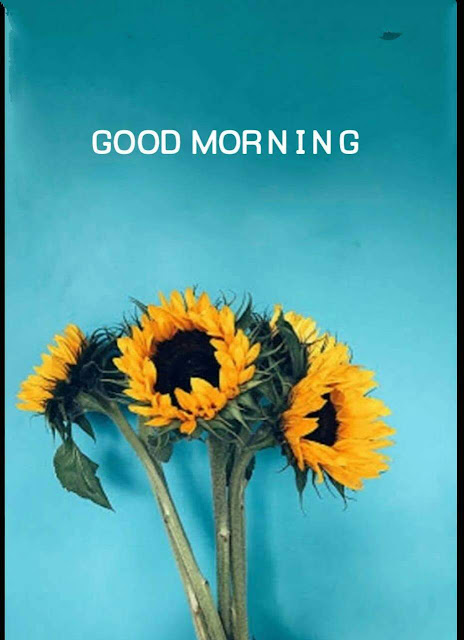 Good Morning flower Wishes For Facebook