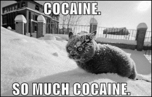 Trippy cat • Cocaine, so much cocaine!