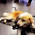 Ιωάννινα:Με κομμένο λαιμό από τη διπλή αλυσίδα που έσερνε...βρέθηκε σκυλίτσα στους Χουλιαράδες
