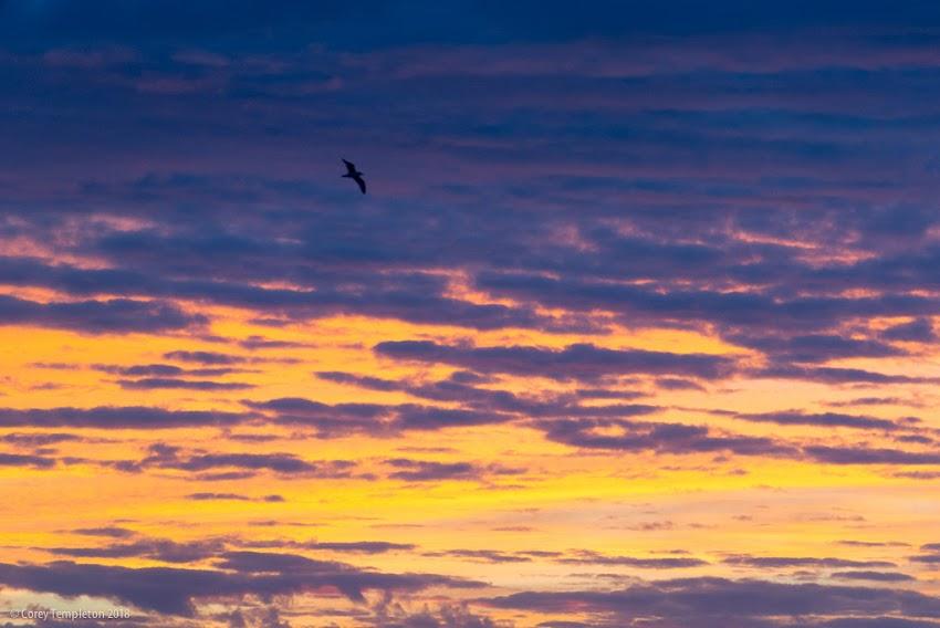 Portland, Maine USA Sunrise sky photo by Corey Templeton