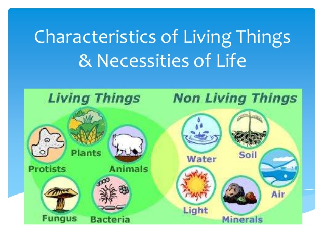 seven characteristics of living organisms Seems like you should easily be able to tell when something is living right well scientists use seven characteristics of life to help them classify organisms this is fundamental information that needs to be learned before moving on to more detailed aspects of life.