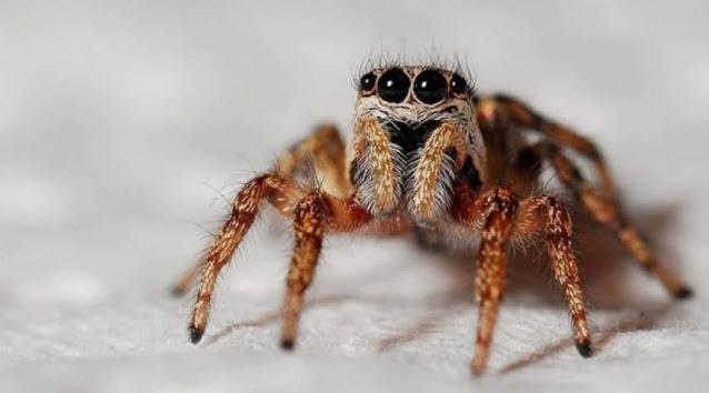 Ciri Ciri Hewan Arachnida