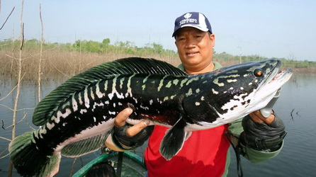 List Nation: 10 Most Badass Fish in the World Plus One - photo#4