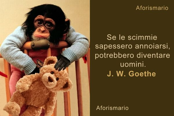 Immagini Scimmiette Divertenti