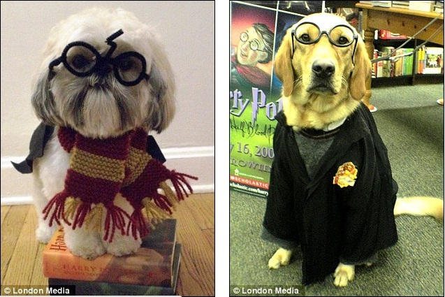 Welcome To Dogwarts The Cute And Hilarious Pictures Of Dogs Dressed