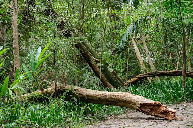 Imagem de um tronco caido no meio de um caminho no bosque