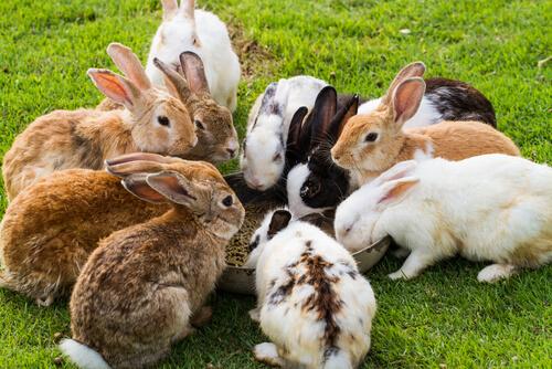 Para activar el Plan Conejo que propone el Gobierno se necesita más que zanahorias