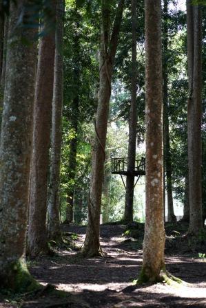 hutan madapi