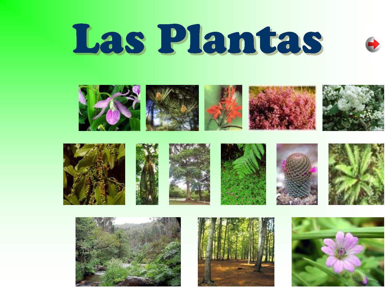 Significado de plantas ornamentales clasificaci n de for Viveros ornamentales definicion