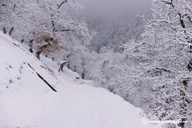 Marradi, castagneto sotto la neve 2019