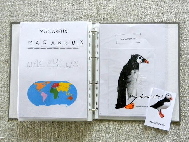 || Activité autour des cartes de nomenclature : Représenter et comparer des animaux (macareux)