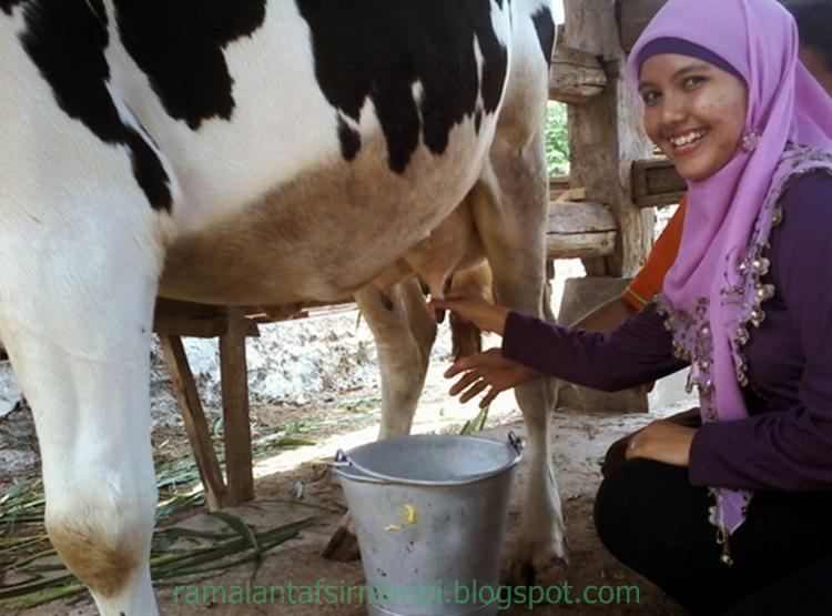 Arti Mimpi Lihat Orang Memerah Susu Sapi 10 Arti Mimpi Lihat Orang Memerah Susu Sapi Menurut Primbon Jawa