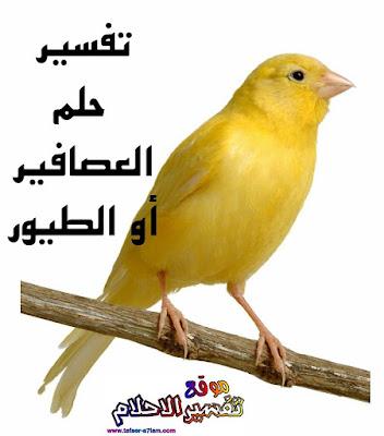 تفسير حلم العصافير في المنام لابن سيرين