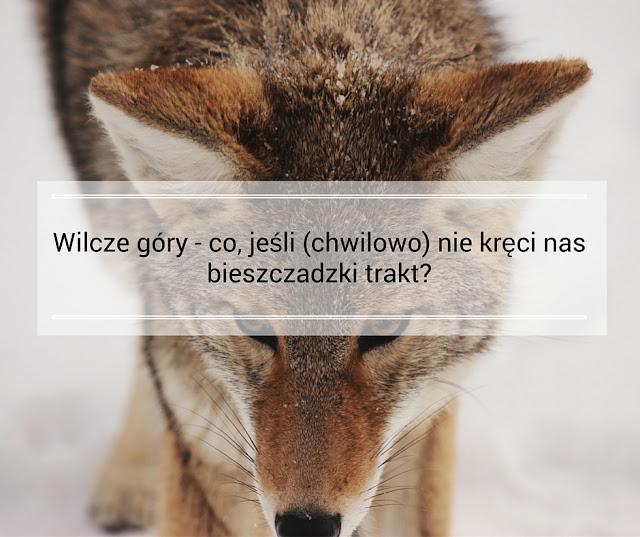 bieszczady wilk