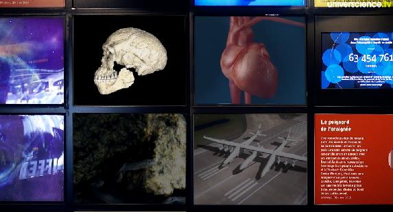 http://www.universcience.tv/video-un-crane-qui-repousse-les-origines-de-lohomme-moderne-15138.html
