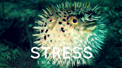 what-is-aquarium-stress