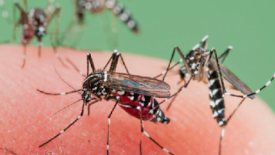 How To Get Rid Of Mosquitoes In Your House Article