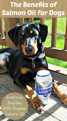 salmon oil benefits for dogs rescue doberman
