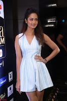 Shanvi Looks super cute in Small Mini Dress at IIFA Utsavam Awards press meet 27th March 2017 105.JPG