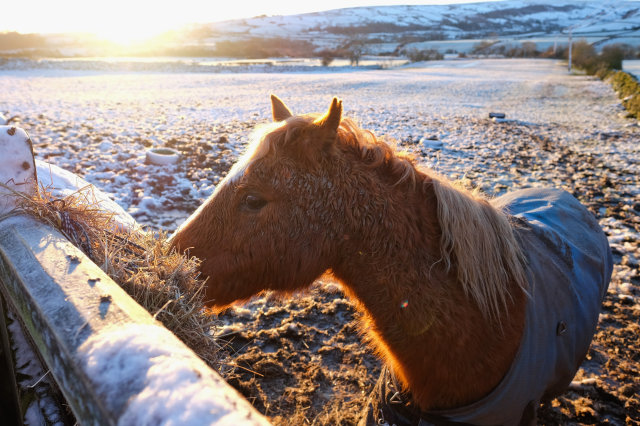 Winter Draws On - Page 2 Cold%2Bday%2Bhorse