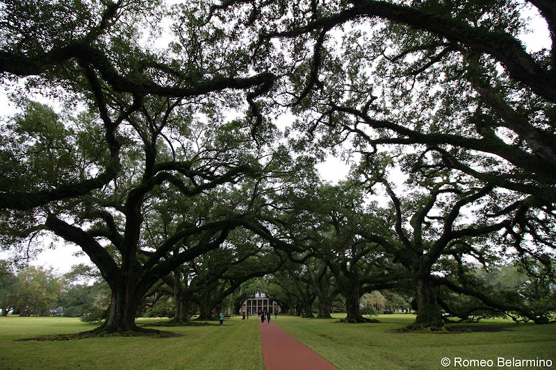 Oak Alley Plantation Things to Do in New Orleans