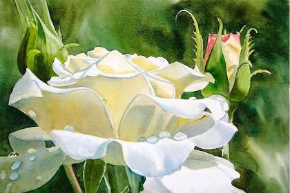 Cuadros De Flores Grandes Blancas