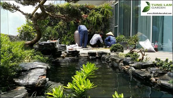 cải tạo bể bơi thành bể cá Koi, làm bể cá Koi, cải tạo bể cá Koi như thế nào