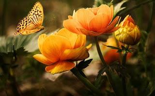 सर्व फुलांची माहिती हिंदी ▷ some facts about flowers in hindi