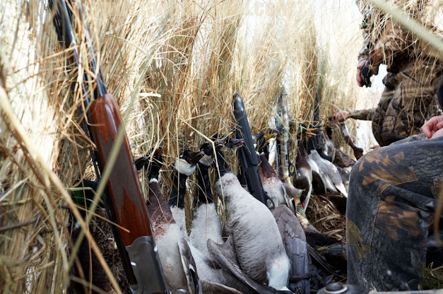 12 critical mistakes make Duck Hunters Get Skunked
