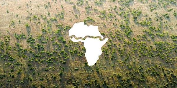 Avanza la Gran Muralla Verde de 8.000 km de árboles para salvar a África y al mundo.