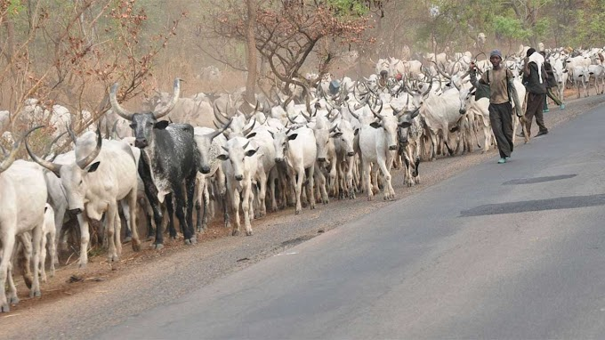 Fulani radio to educate herdsmen, fishermen, farmers, hunters — NBC