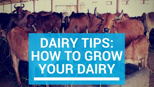 Dairy Tips: How to grow your Dairy