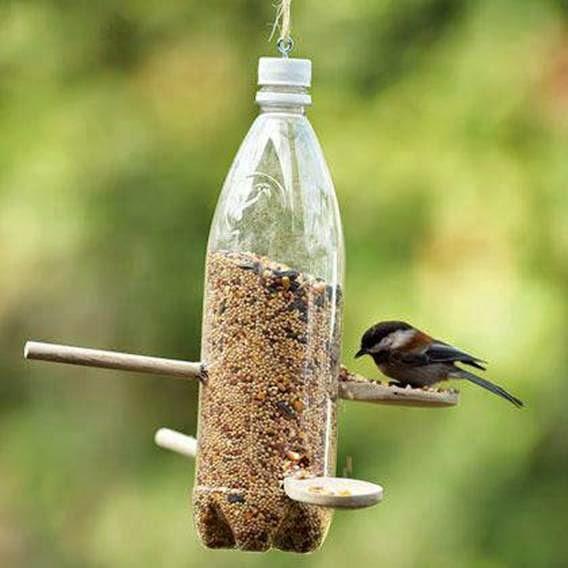 Un alimentador de aves con botella de pet.