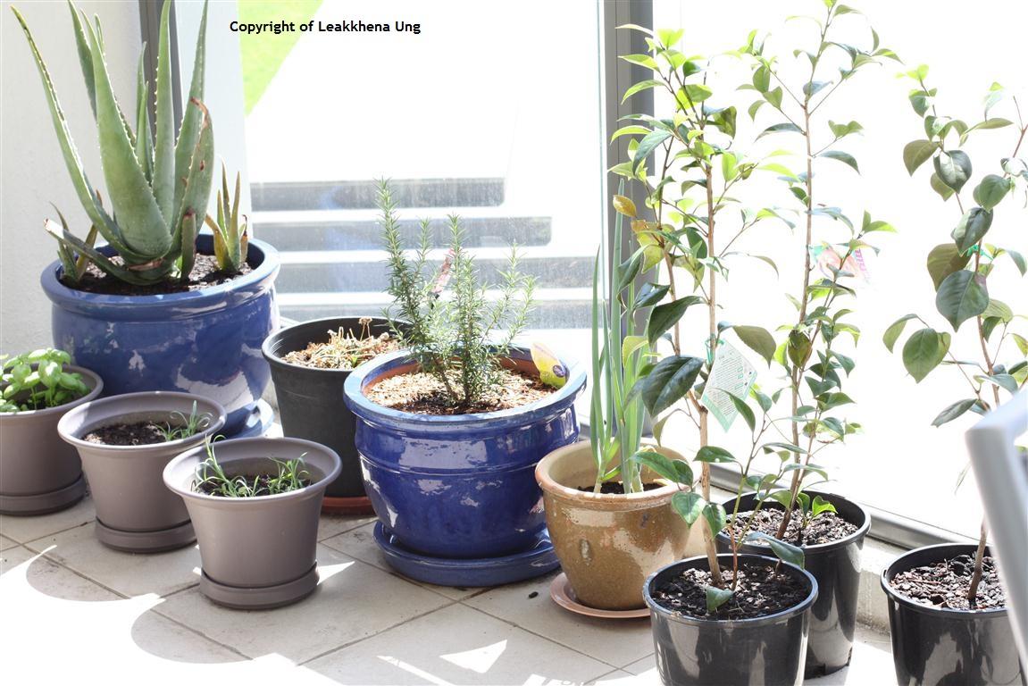 Smart Money Guide: Apartment Gardens: Container Gardening ...