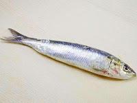 Apa sih Perbedaan Ikan Sarden dan Ikan Makarel?